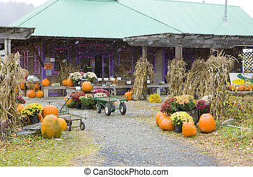 Halloween in Middlesex, Vermont, USA