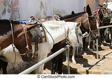 Santorini Donkey - Donkeys at the Greece Santorini island...