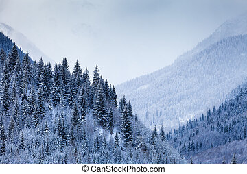 Mountain Valley with coniferous trees covered by snow -...