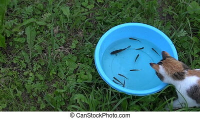 cat catch fish bowl - Curious cat catch fish from blue...