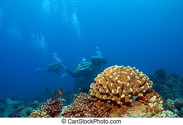 Hawaiian Coral with Divers in the background