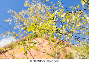 Plum tree at Fall Sunny october day