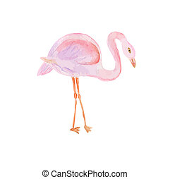 Watercolor painted illustration of flamingo.