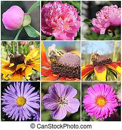 flores, y, abejas, collage,
