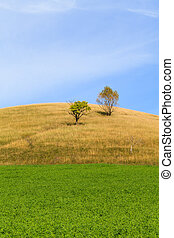 Alfalfa field - Picturesque landscape of alfalfa field and...