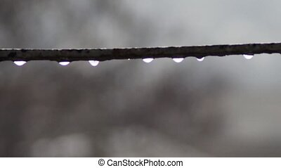 Drops of water dripping in the rain - Water droplets that...