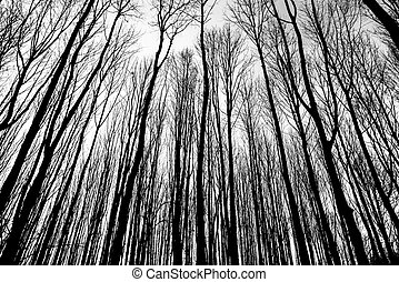 branches of winter trees - gradient of branches of winter...