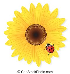 Sunflower and ladybird on white background. Vector...