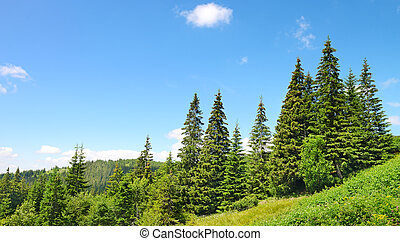 Beautiful pine trees in mountains....