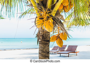 Coconuts on a palm tree against tropical white sandy beach -...