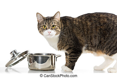 Cat steals food from the pot - Gray,domestict cat steals...