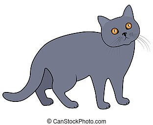 Gray cat - British Shorthair cat with yellow eyes on a white...