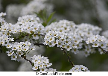 white blooming flowers