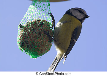 Tomtit hanging at a food ball in winter time.