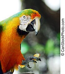 green yellow macaw bird isolated - isolated shot of a green...