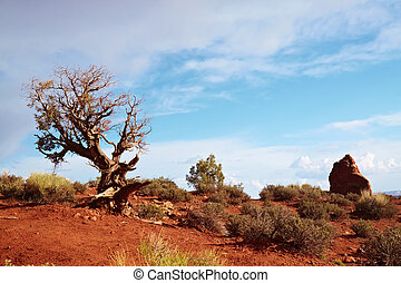Desert Tree, Arches National Park, Utah, USA