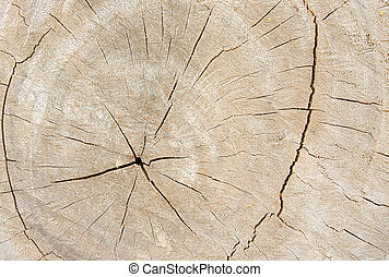 Old wood background, annual ring