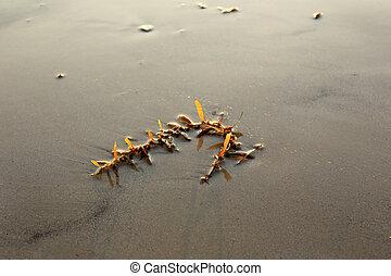Alga on the beach of thailand