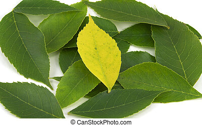 Uniqueness - Yellow Leaf Among Greens (Centered) - A single...