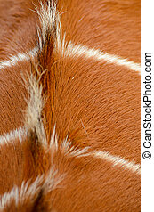 Back of a antilope - Looking closeup at the texture in the...