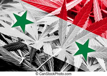 Syria Flag on cannabis background. Drug policy. Legalization...