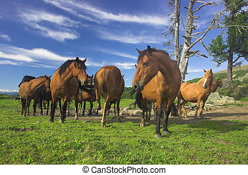 pasture - horses on the pasture