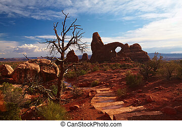 Desert Tree - Desert after the Storm, Arches National Park,...
