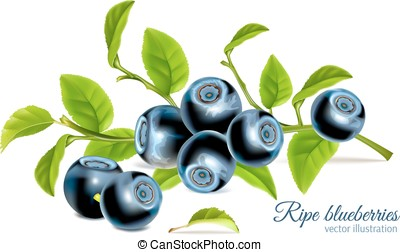 Blueberries with leaves. Vector illustration