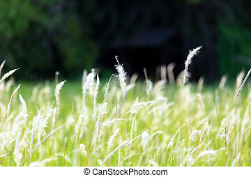 blow white flower grass