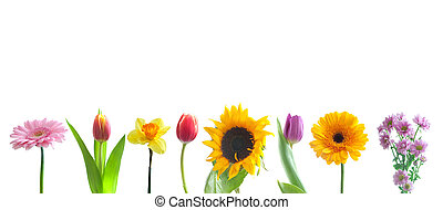 Spring flowers in a row - Spring flowers border over a white...