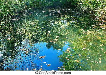 Sky reflection on pond