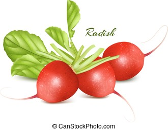 Fresh radishes. - Fresh ripe radishes. Vector illustration