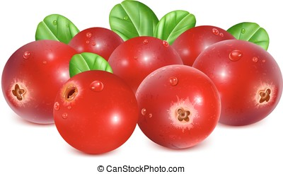 Ripe red cranberries with leaves and water drops vector...