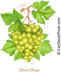 Green grape cluster with green leaves.