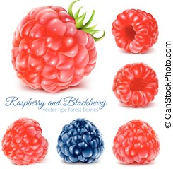 Raspberries and blackberry - Collection of ripe raspberries...