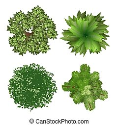 Top view trees - Top view tree elements for landscape design...