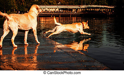 Dog Jump - Dog jumping into the water