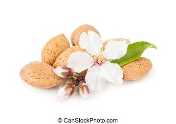 Almond Whith Flower - Dried almonds with almond blossom,...