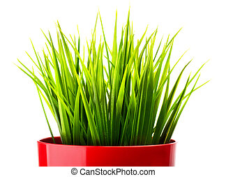 Green grass in a red pot close-up