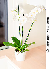 Orchid on kitchen countertop vertical
