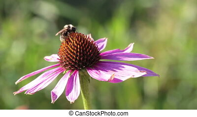 Bee on the Flower Collecting Nectar
