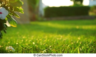 Fresh green lawn in evening light - Low angle view of a...