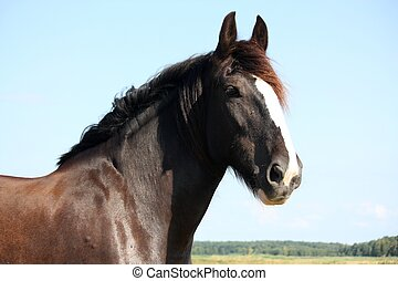 Portrait of beautiful shire horse on sky background -...