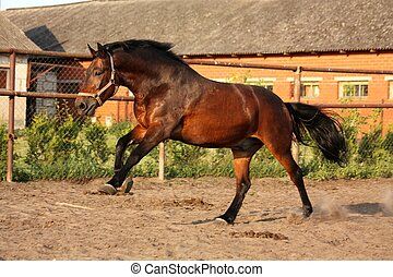 Playful running horse in paddock - Playful running horse in...