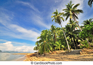 Wild Tropical Beach - Lonely Tropical Beach in the Morning