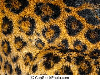 Leopardo, detalle, piel