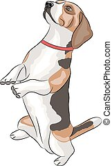 Vector. Beagle dog. - Beagle dogs sitting on his hind legs...