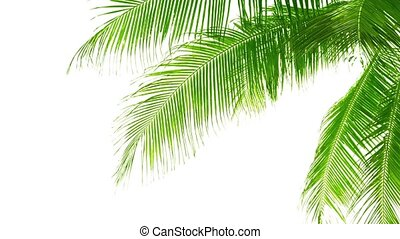 Palm leaves isolated on white background. Good material for...