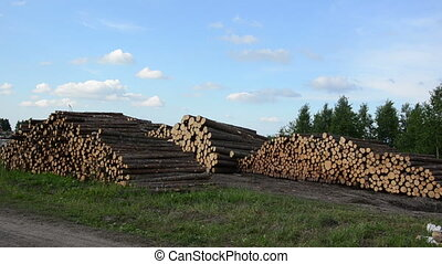 wood felling industry - Wood felling industry. Stacked birch...