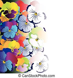 Colored pansy flowers on white background